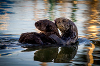 Momma and baby Sea Otter